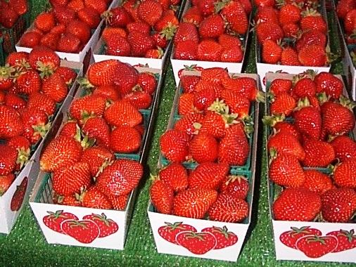 Strawberries, Anyone?