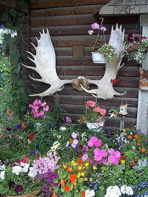 Alaska by land and