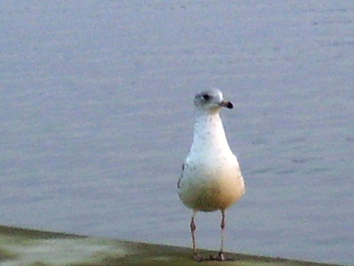 Seventy Year Old Seagull...