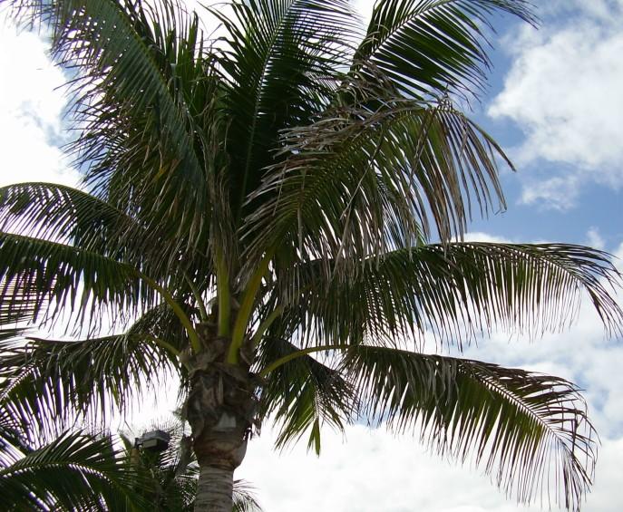 Palm Trees in Heaven